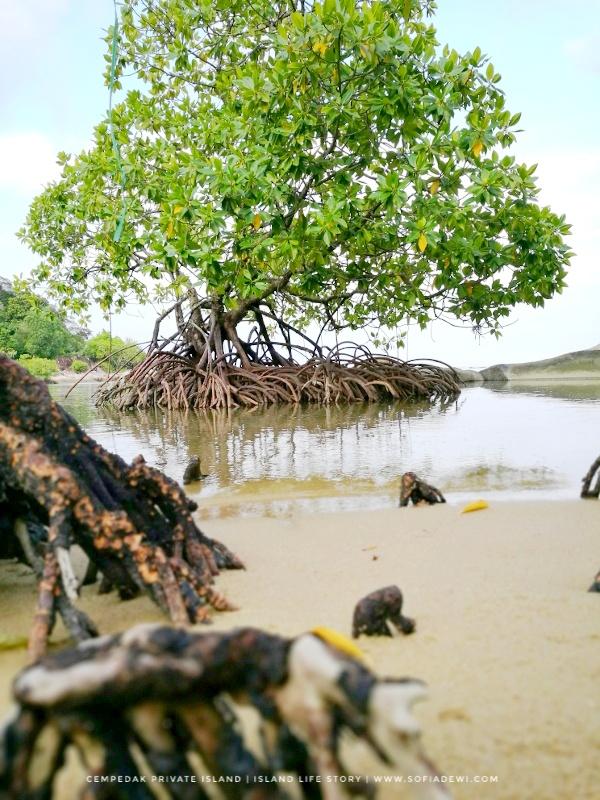 cempedak private island sofia dewi (13).jpeg