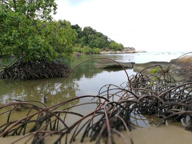 pulau cempedak 8